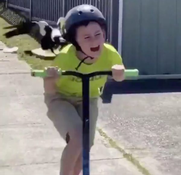 Video: boy on scooter rides for his life as bird kept pecking him
