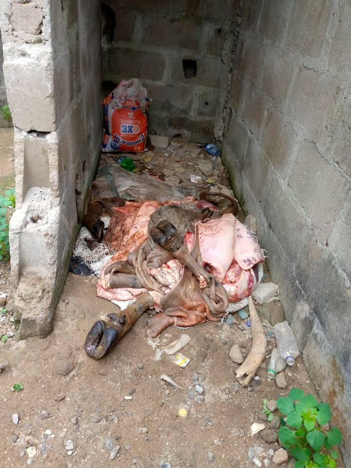 Lagos state govt dismantle illegal abattoirs; seize cow and butchered meat (photos)