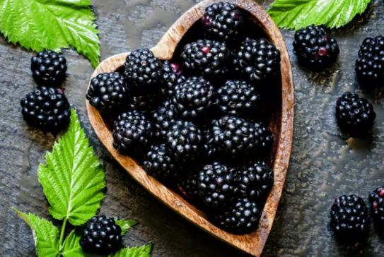 5 impressive health benefits of blackberries you didn't know!