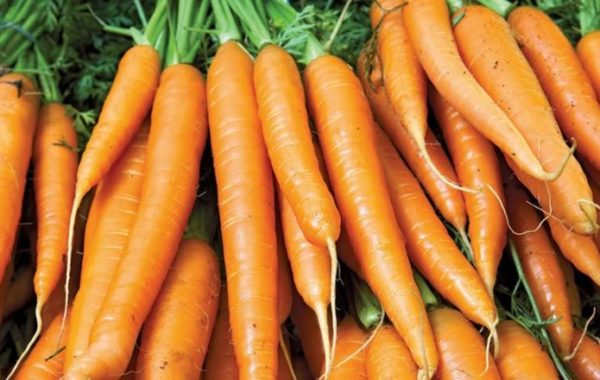 Carrot: 5 side effect of this vegetable to the body system