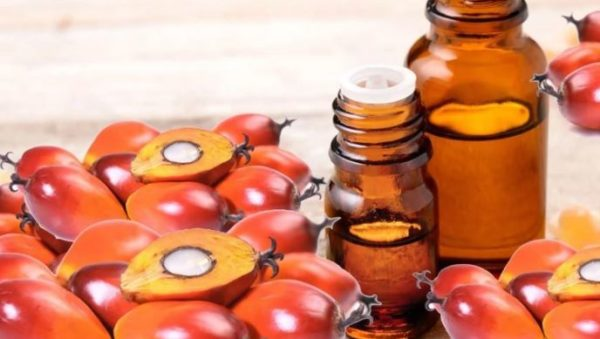 7 incredible health benefits of Palm kernel oil