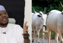 Investing in cows better than cryptocurrency – Adamu Garba