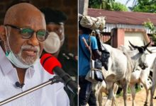 """""""Any cow seen in Akure will be arrested""""- Rotimi Akeredolu"""