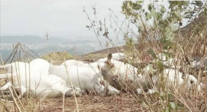 Police launch investigation into mysterious death of cows in Ondo