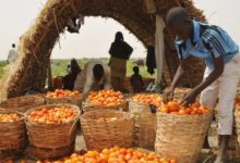 President Buhari: We will fight banditry to prevent food insecurity