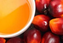 5 amazing benefits of kernel oil for hair