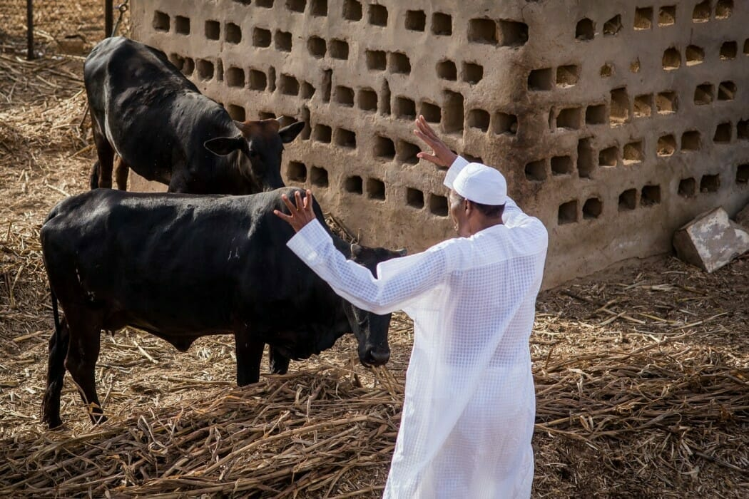 Buhari approves review of grazing reserves in 25 states