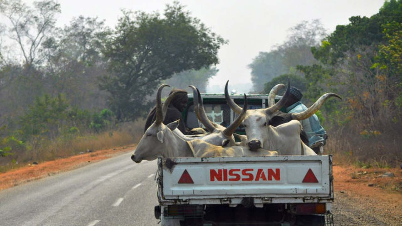 Masari bans transportation of cattle from Katsina to other states